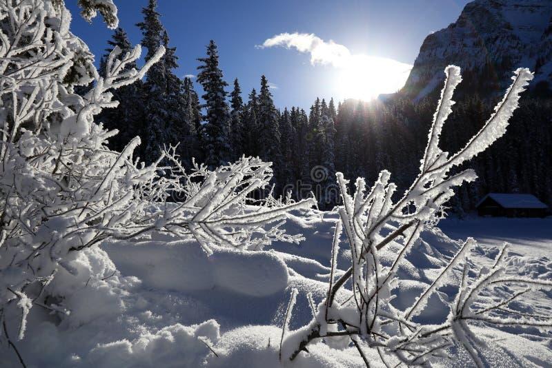 Paysage d'hiver dans le Canada, lac Louise Snowflakes congelée sur des usines photo libre de droits