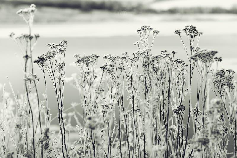 paysage d'hiver dans le domaine images libres de droits