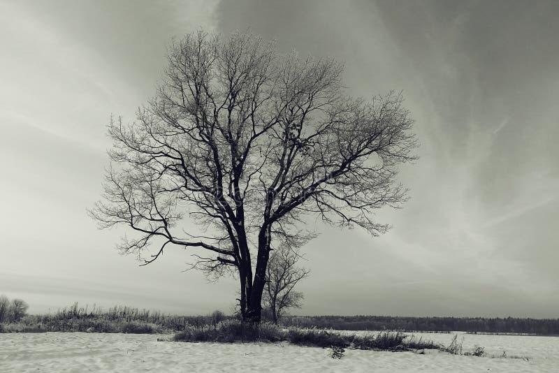 paysage d'hiver dans le domaine images stock