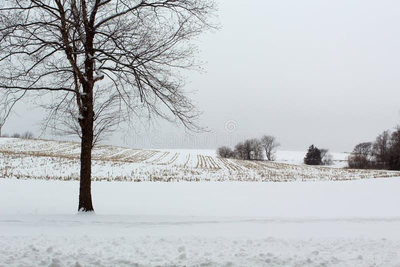 Paysage d'hiver dans le sud-ouest Iowa image libre de droits