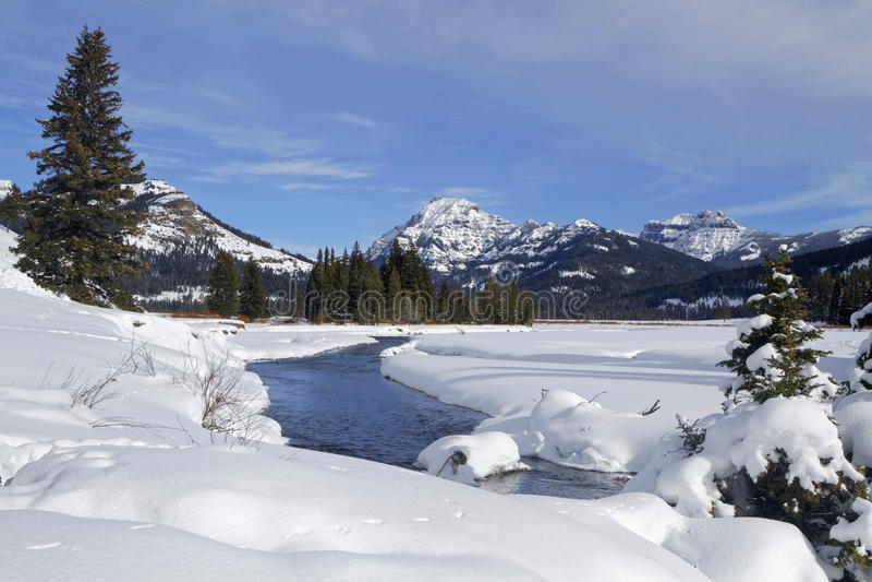 Paysage d'hiver dans Yellowstone photographie stock libre de droits