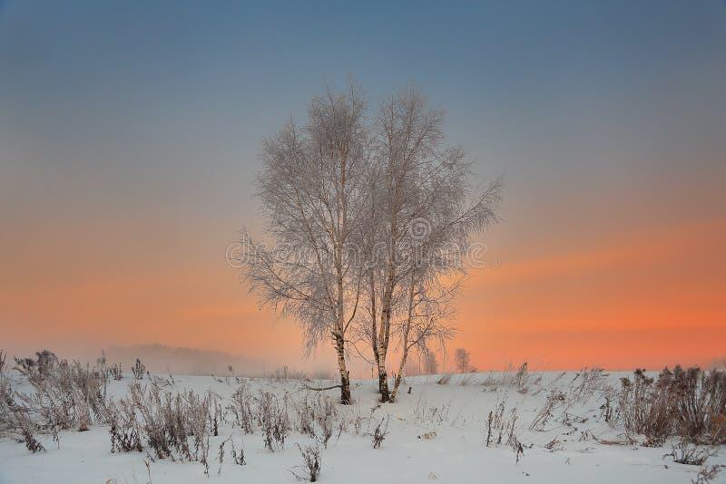 Paysage d'hiver de deux arbres dans un domaine neigeux au coucher du soleil images stock