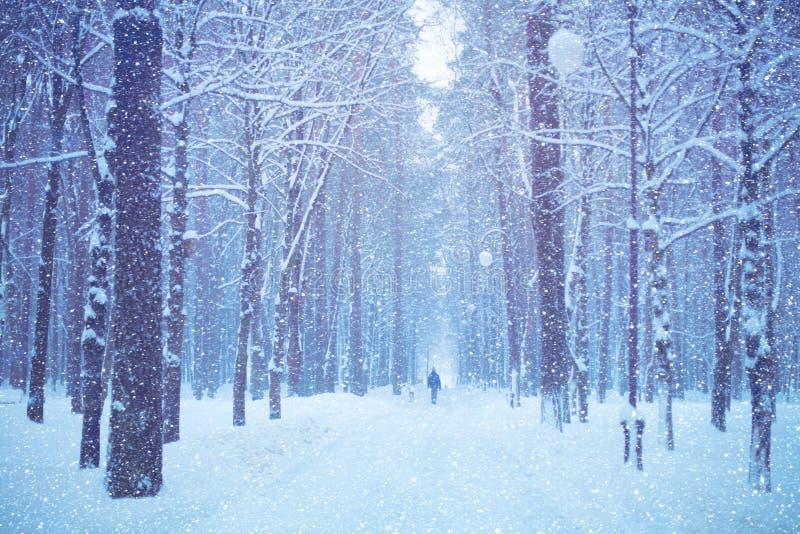 Paysage d'hiver de nature de parc couvert de neige de ville images libres de droits