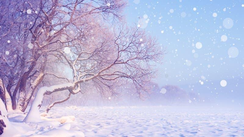 Paysage d'hiver en chutes de neige Fond de Noël Arbres givrés Scène de l'hiver de Milou Conte de fées de l'hiver image stock