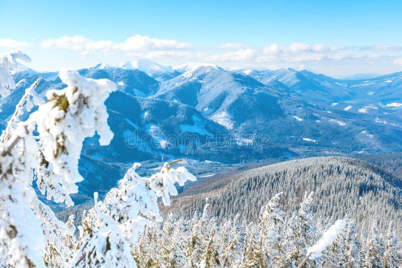 Paysage d'hiver en montagnes photo libre de droits