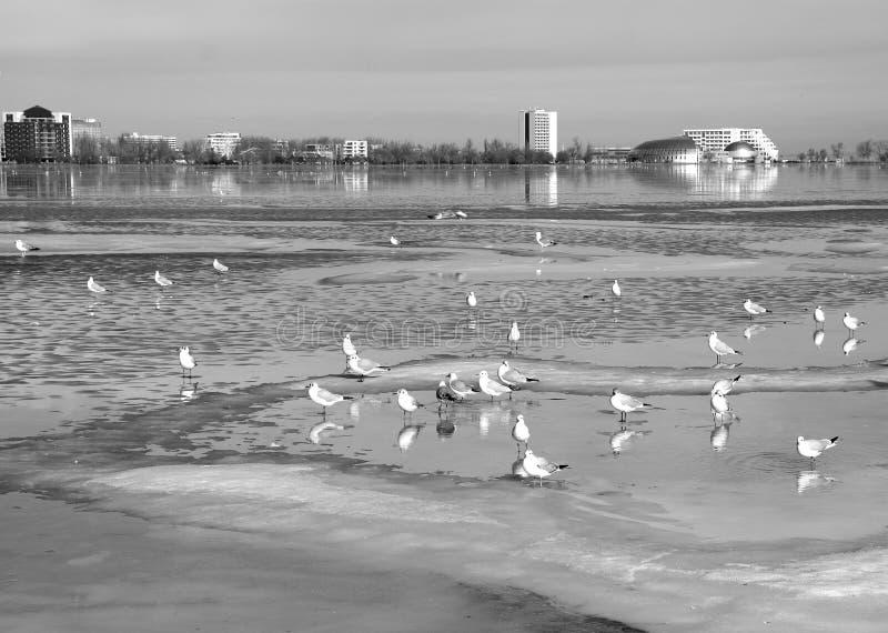Paysage d'hiver sur le lac Tabacarie dans Constanta, Roumanie images libres de droits