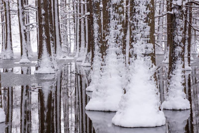 Paysage d'horaire d'hiver dans la forêt avec la neige fraîche, Roumanie, l'Europe image stock