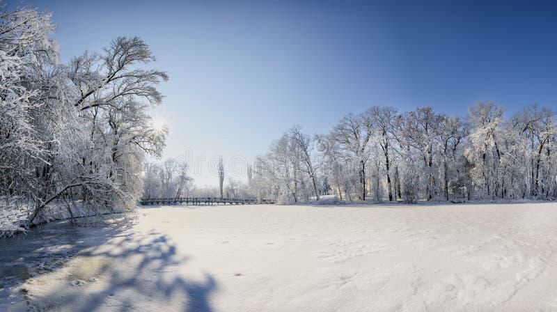 Paysage d'horaire d'hiver dans la forêt avec la neige fraîche, Roumanie, l'Europe photographie stock