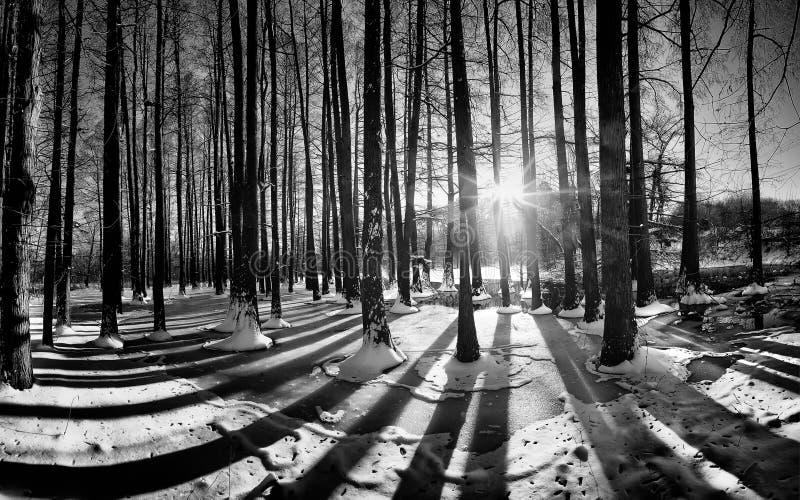Paysage d'horaire d'hiver dans la forêt avec la neige fraîche, Roumanie, l'Europe images libres de droits