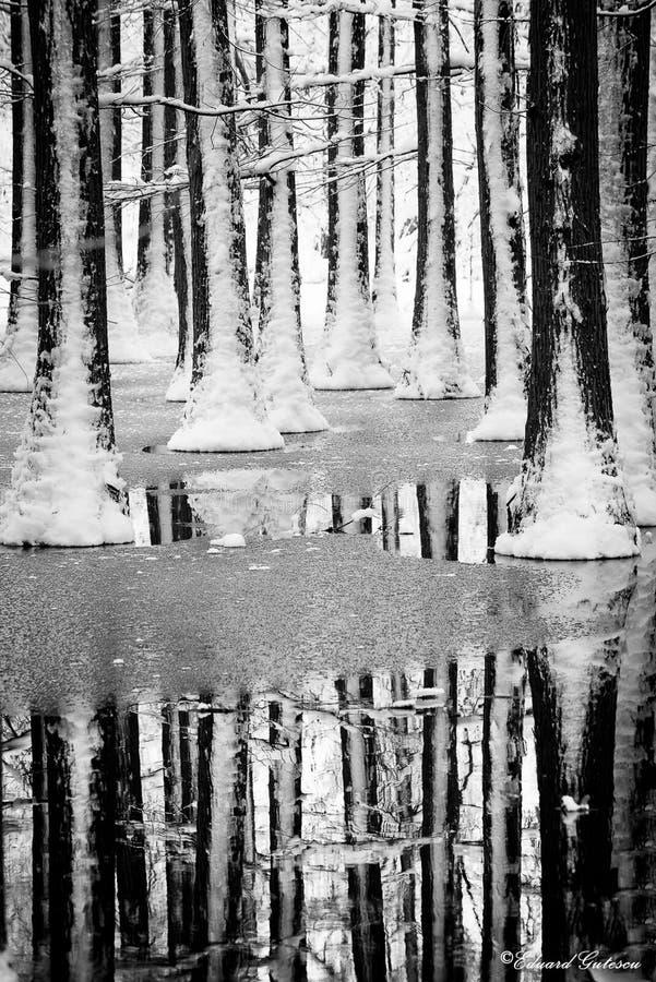 Paysage d'horaire d'hiver dans la forêt avec la neige fraîche, Roumanie, l'Europe photos stock