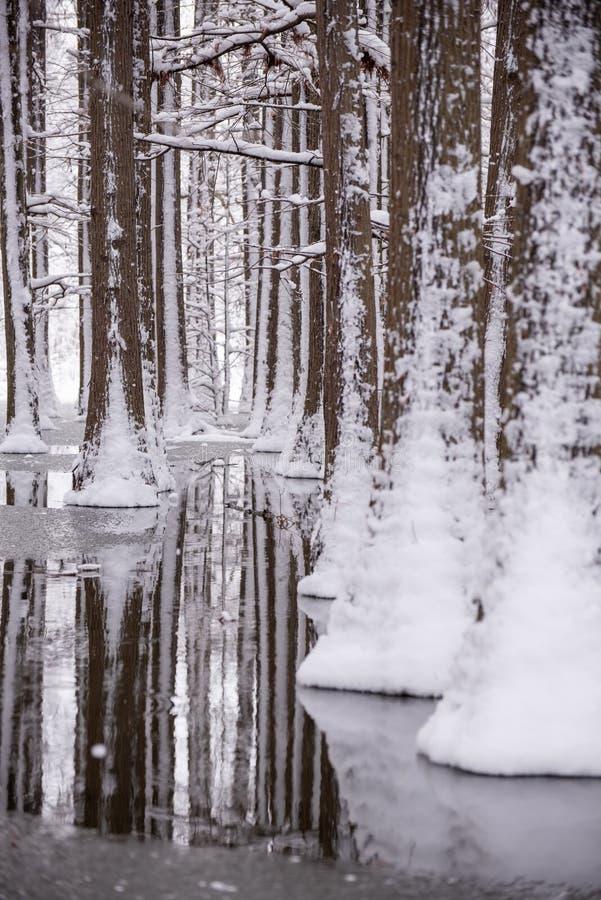 Paysage d'horaire d'hiver dans la forêt avec la neige fraîche, Roumanie, l'Europe image libre de droits