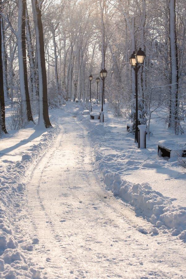 Paysage d'horaire d'hiver dans la forêt avec la neige fraîche, Roumanie, l'Europe photo libre de droits