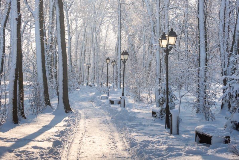 Paysage d'horaire d'hiver dans la forêt avec la neige fraîche, Roumanie, l'Europe photos libres de droits