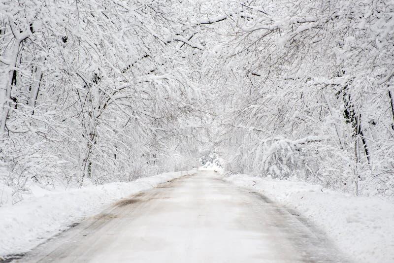 Paysage d'horaire d'hiver dans la forêt avec la neige fraîche, Roumanie, l'Europe photographie stock libre de droits