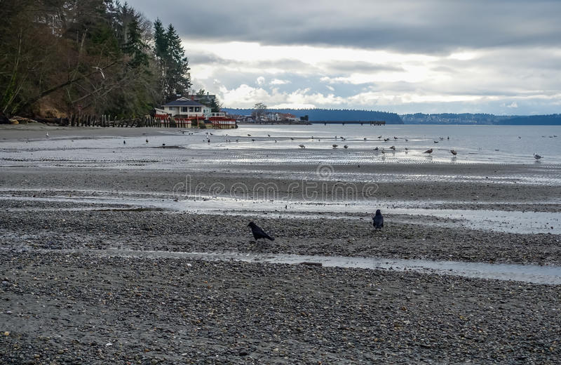 Paysage d'oiseaux de Shoreline image libre de droits
