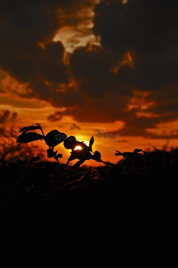 Paysage d'un beau coucher du soleil avec une silhouette de la nature à l'arrière-plan dans le safari photos libres de droits