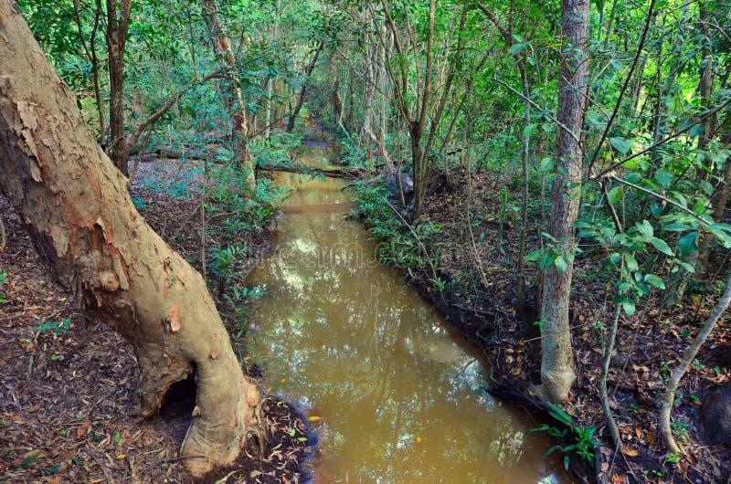 Paysage d'un courant sauvage dans l'Australie du Queensland photographie stock