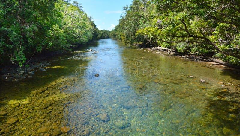 Paysage d'un courant sauvage en parc national Queensland de Daintree images libres de droits