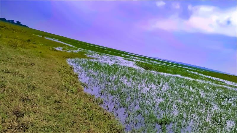Paysage d'un lac herbeux, vue d'un horizon avec nuage de zone rurale indienne, photo stock