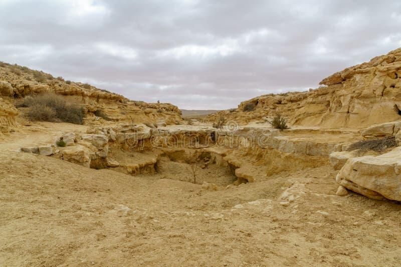 Paysage d'un oued en parc national d'Ein Avdat image stock