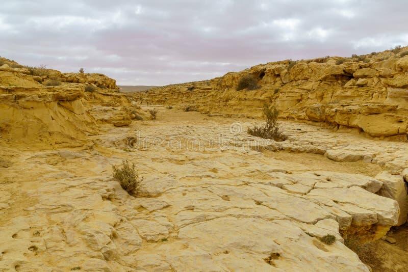 Paysage d'un oued en parc national d'Ein Avdat photo libre de droits