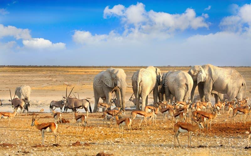 Paysage d'un point d'eau vibrant dans Etosha images libres de droits