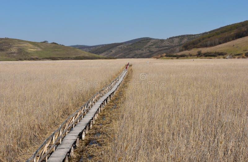 Paysage d'une plaine avec le roseau photos stock