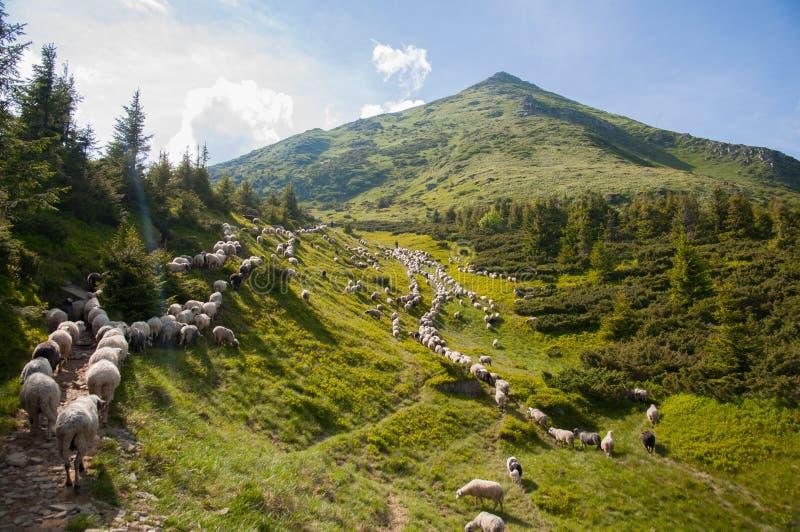 paysage dans carpathien l'ukraine photo stock