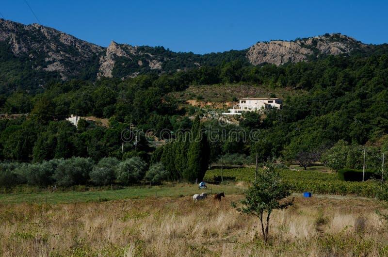 Paysage dans les sud de la France près de Grignan photos libres de droits