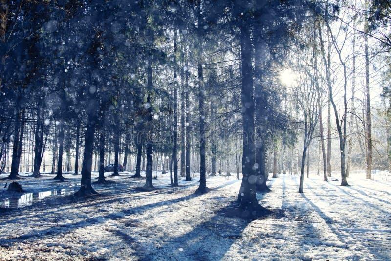 Paysage dans une forêt photos libres de droits