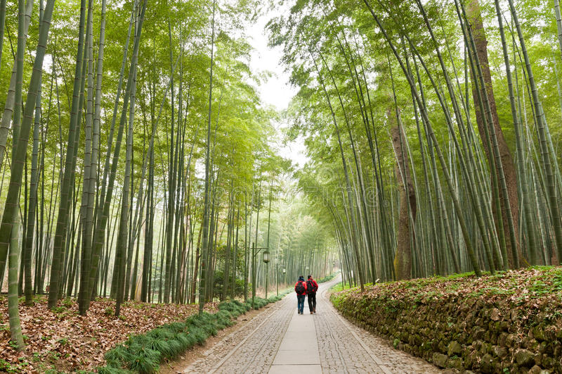 Paysage de bambou de Hangzhou photographie stock libre de droits
