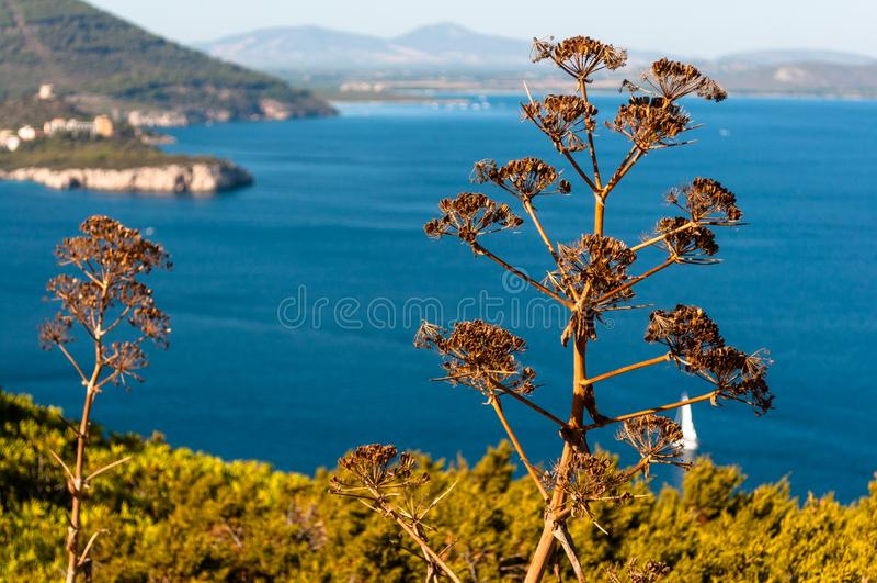 Paysage de c?te de la Sardaigne image stock