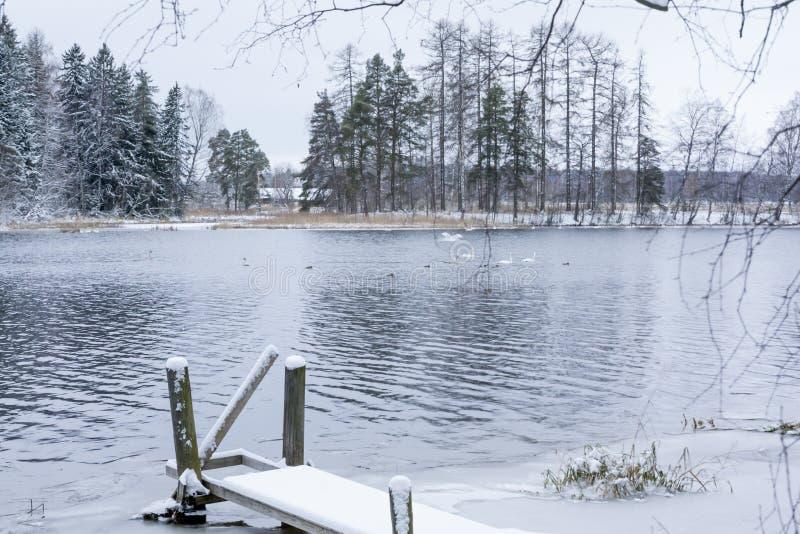 Paysage de calme d'hiver sur une rivière avec cygnes et pilier blancs La Finlande, rivière Kymijoki images stock