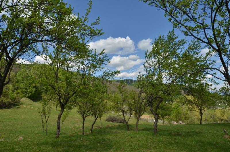 Paysage de campagne dans le printemps Verger vert photos libres de droits