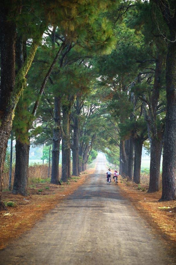 Paysage de campagne du Vietnam avec des enfants faisant un cycle à l'école sur la route de soild le long des lignes d'arbre photographie stock libre de droits
