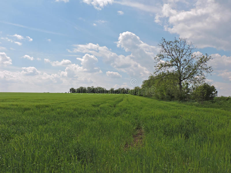 Paysage de champ d'herbe photos stock