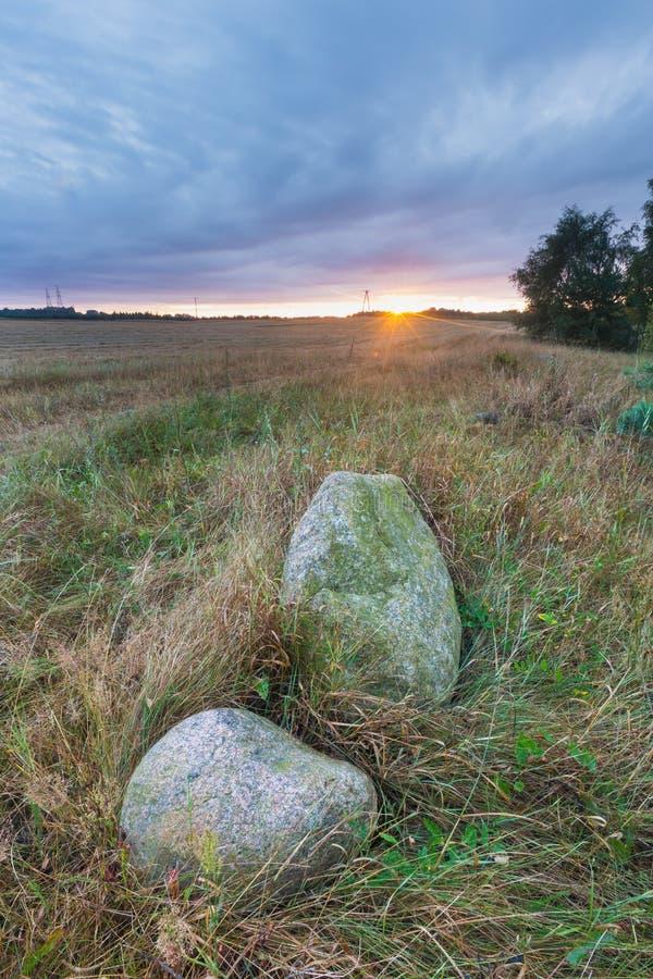 Paysage de champ de maïs image libre de droits