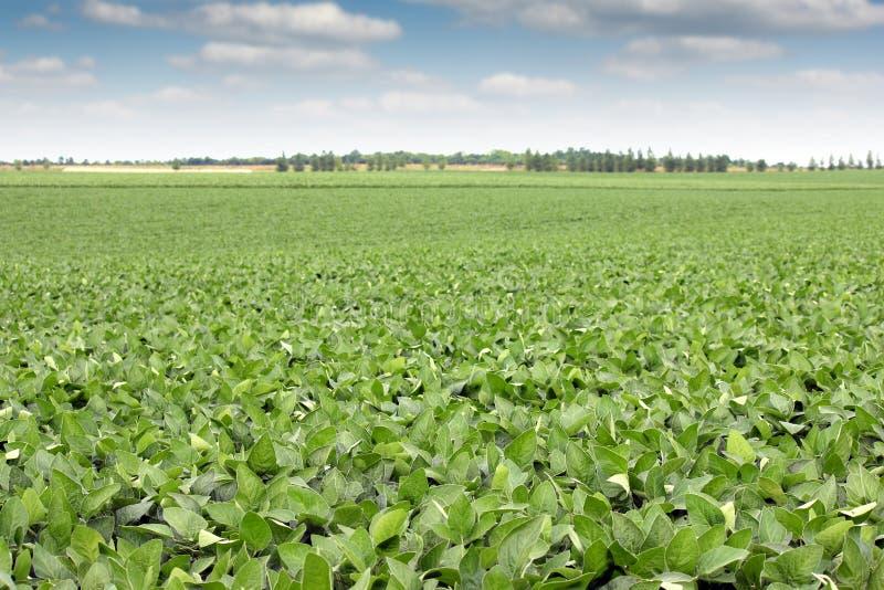 Paysage de champ de soja photos stock