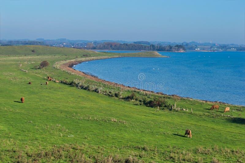 Paysage de champ de vache photo libre de droits