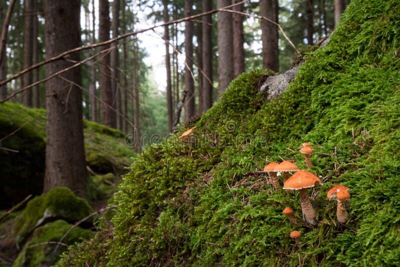 Paysage de champignon photographie stock libre de droits
