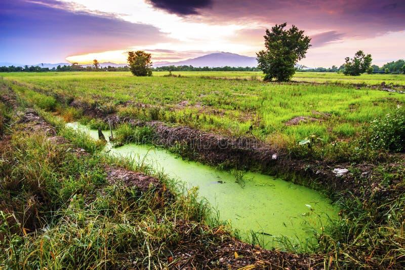 Paysage de chaume de champ et de ciel de coucher du soleil image stock
