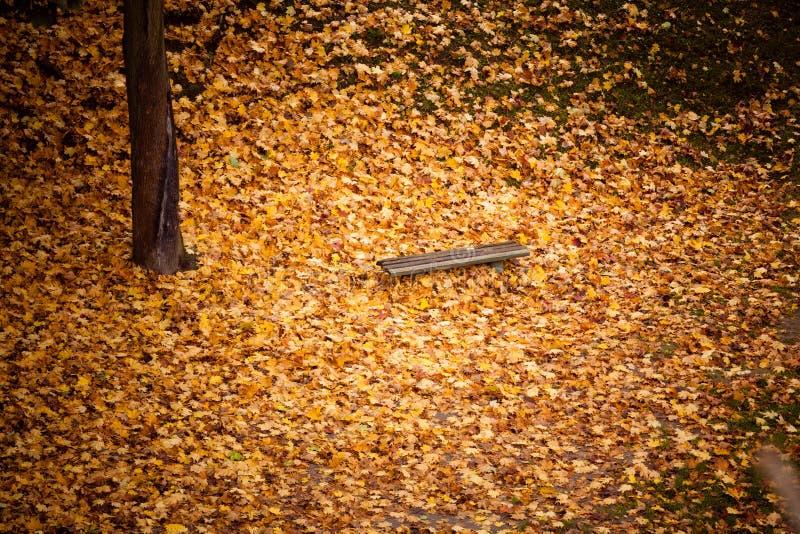Paysage de chute d'automne Banc et feuilles en parc de ville photos libres de droits