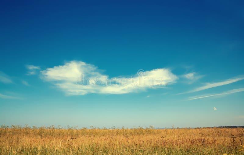paysage de chute sur le fond de l'herbe jaune photo libre de droits