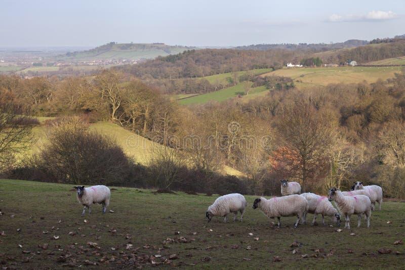 Paysage de Cotswold en hiver images libres de droits