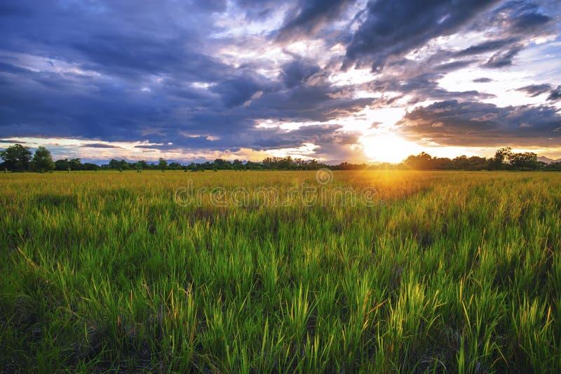 Paysage de coucher du soleil sur un gisement de riz en Thaïlande image libre de droits