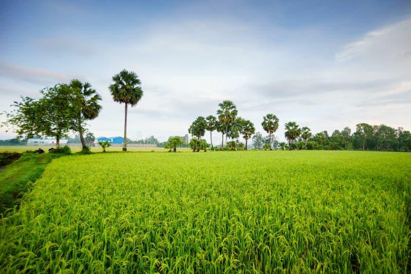Paysage de début de la matinée avec des palmiers photographie stock libre de droits