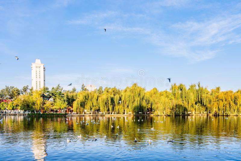 Paysage de début de la matinée de parc de Cuihu à Kunming, Yunnan, Chine photo libre de droits