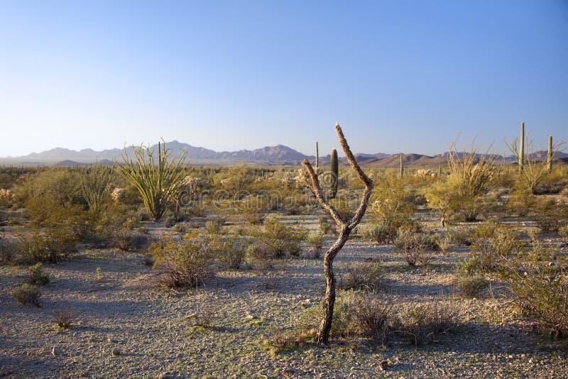 Paysage de désert de matin, Arizona images stock