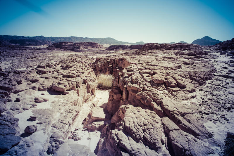 Paysage de désert de Sinai photographie stock libre de droits