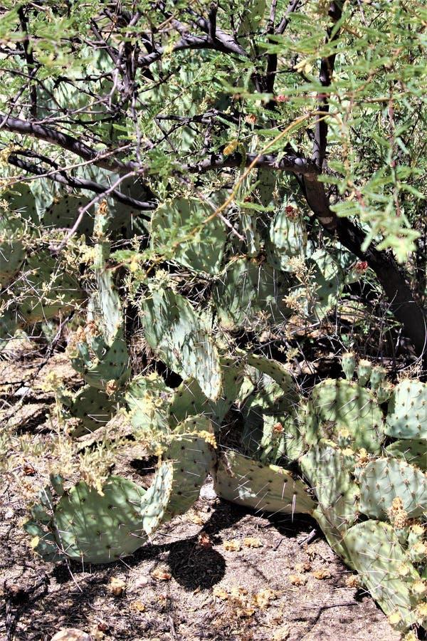 Paysage de paysage de désert situé dans le comté de Cochise, St David, Arizona photographie stock